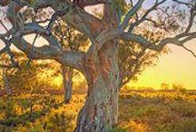 Aussie Aussie Aussie / by Curious Bab