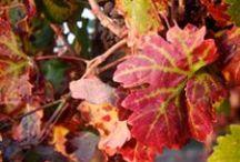 Couleurs d'automne / Photos inspirantes aux couleurs de l'automne et paysages de vigne.