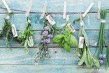 ervas e condimentos