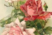 flowers,rose