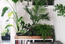 HOME - CONSERVATORY / Plants...plant...more plants please. Get your nature mojo working.