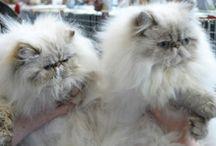 Amalfi&Elliot