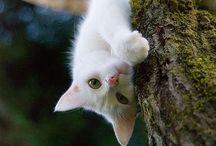 cat / cat / by ichiyu