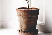 Indretning - planter