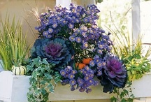Floral mood / by Tiffany Nail Center