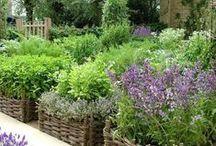Inspire Me in the Garden