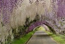 Wishing Tree / Lavender colour inspired garden theme with oriental touches