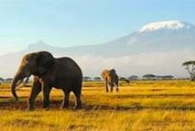 Africa Bucket List / So much I want to do and see in Africa!