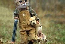 <3 cats / Faboulus feline