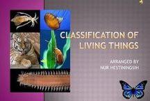 School - Biodiversity 2 / Biodiversity