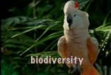 School - Biodiversity / Science