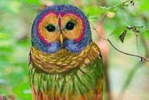 colourful birds / Beautiful color palettes,birds inspirations,love birds,rare birds