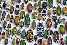 ^bugs stuff^
