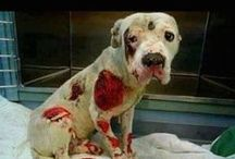 STOP ANIMAL ABUSE!!! PLEASE / Animal abuse and awareness, I am against all abuse in all its forms I realize these images are difficult to look at. The only way it changes is us!