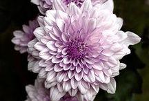 Unbelievably Stunning Flowers / by Tammy Orrick