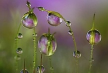 Dew Droplets and Bubbles / by Tammy Orrick