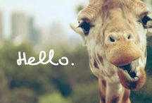Peace. Love. Giraffe. / by Alyssa Glenn
