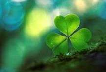 Shamrocks / Another hobby- collecting anything shamrock / by Sue Tasker