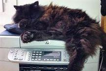 L'art de la paresse / Les chats ont un art bien à eux... celui de la paresse. Ils le pratiquent avec délice dans tous les lieux probables ou improbables.