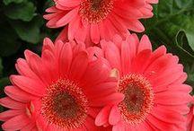 Flower Power / No weeding necessary / by Sue Tasker