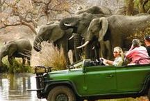 South African safaris / Safari ideas, clothing, places and styles in South Africa.