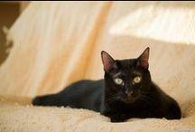 #PerleNoire 2014 / Un Selfie pour une grande cause ! A l'occasion de la 5ème édition de l'opération Adoptez une Perle Noire, Seconde Chance et Wanimo vous invitent à succomber à la mode des Selfie pour prouver au plus grand nombre que les animaux noirs sont aussi beaux que les autres. A vos Selfies #PerleNoire pour promouvoir l'adoption des animaux noirs ! Pour participer, postez votre photo sur notre page facebook, ou sur twitter, Google+, Instagram...