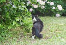 Je suis un aventurier / Votre chat est un aventurier qui a accès au jardin ? Wanimo.com propose tous les accessoires indispensables à sa vie de baroudeur !