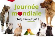 Journée Mondiale des Animaux / On aime nos animaux toute l'année mais en ce 4 octobre, voici une bonne raison de leur faire encore plus de câlins que d'habitude <3