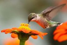 Une hirondelle fait le printemps / Quel bonheur de voir refleurir la nature ! Les oiseaux chantent, les bourgeons sortent et le soleil n'est plus timide ! Les animaux se réveillent doucement et nous rappellent combien le printemps est doux...
