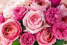 Flowers I