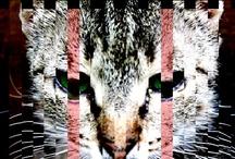 nian cats