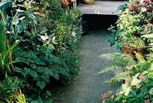 Balcony and gardening