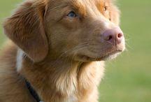Zif / My dog