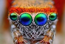 Animals - Insects / by Dave Broeker