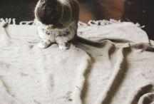 bunnies / bunnies are cute, they need their own board  (o^-^o)