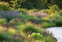 Landscape Ideas-Planting / by Mary Lou Smith