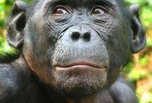 De aap in ons