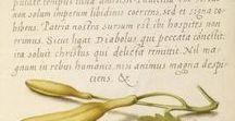 Mira calligraphiae monumenta / floral  art (botanical illustration)  &  calligraphy