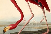 """Audubon / A new and greater Munchausen. """"Garbed in green and crimson"""""""