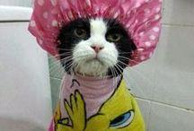 Kitty|Doggy Humour