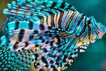Animaux de la mer / Les animaux qui vivent dans la mer