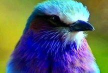 Oiseaux colorés /  Photos d'oiseaux drôles