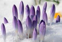 Spring has sprung! / springtime