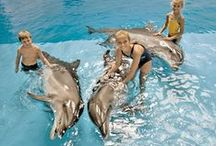 Swim with the Dolphins! / Swim with the dolphins and have an unforgettable experience with the world's most loved animals!