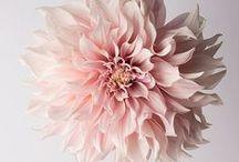 FLOWER POWER. / by Justyna Jastrzębska