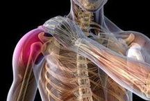 Rotator Cuff Injuries and Treatment / Anything related to rotator cuff damage and repair.