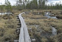 Lapland, Finland / The places I have experienced & seen.