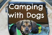 Camping with pets / Products for camping with pets