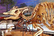 Paleontology & Fossils