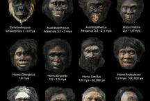Evolution - Anthropology - Human Migration